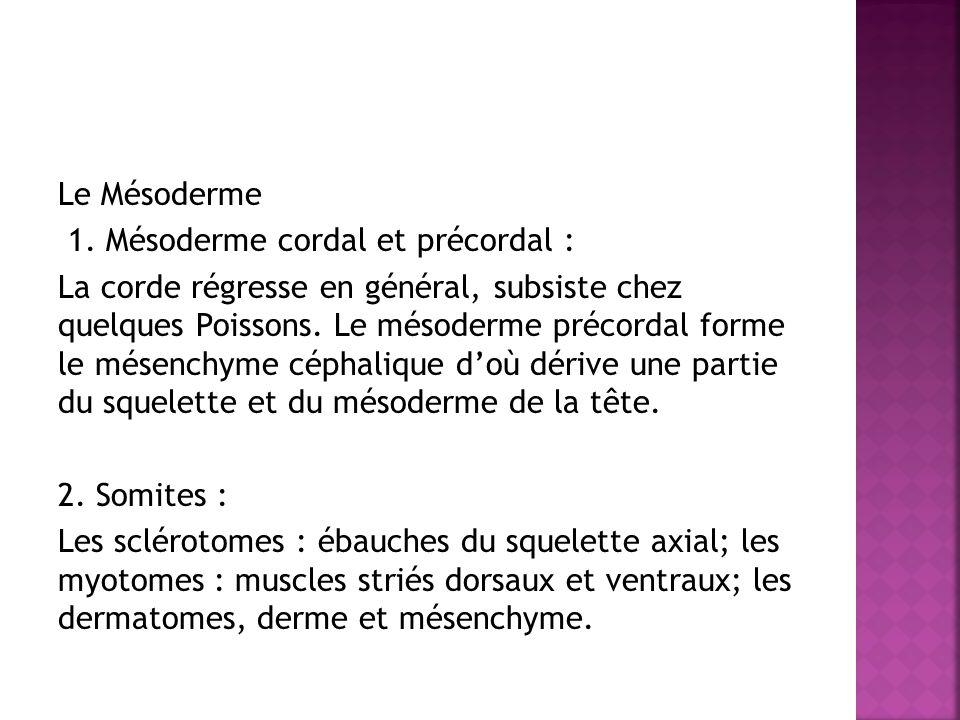 Le Mésoderme 1. Mésoderme cordal et précordal :