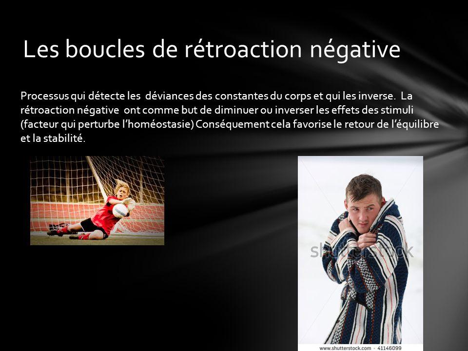 Les boucles de rétroaction négative