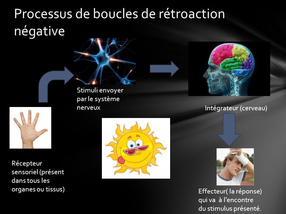 Processus de boucles de rétroaction négative