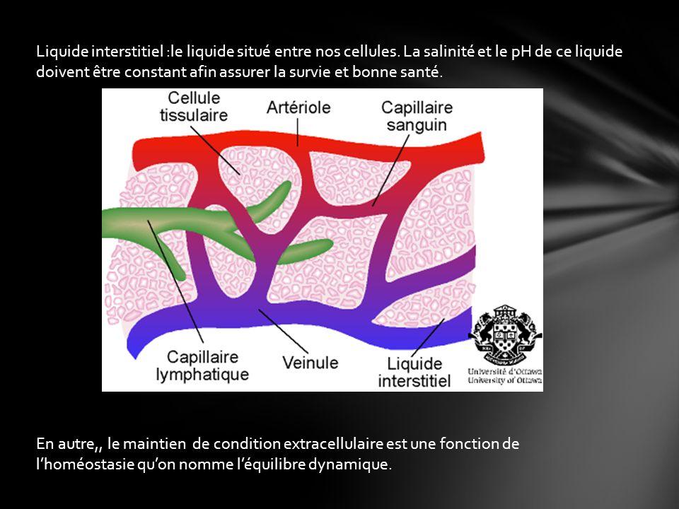 Liquide interstitiel :le liquide situé entre nos cellules