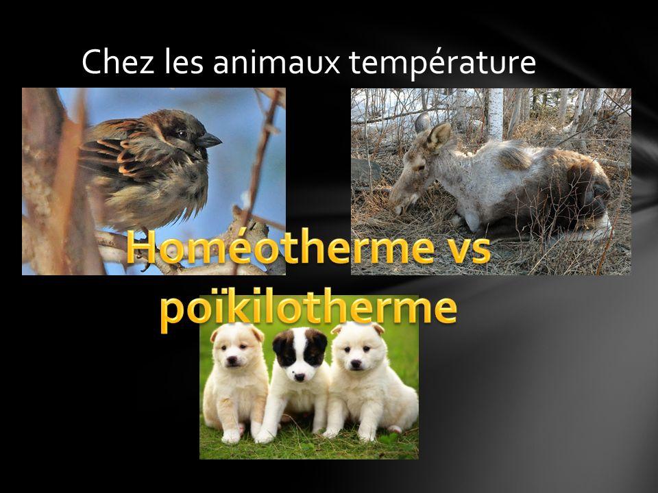 Chez les animaux température