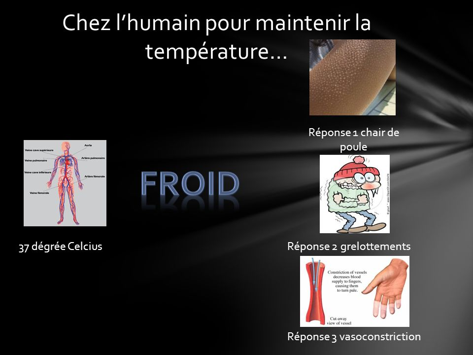 Chez l'humain pour maintenir la température…
