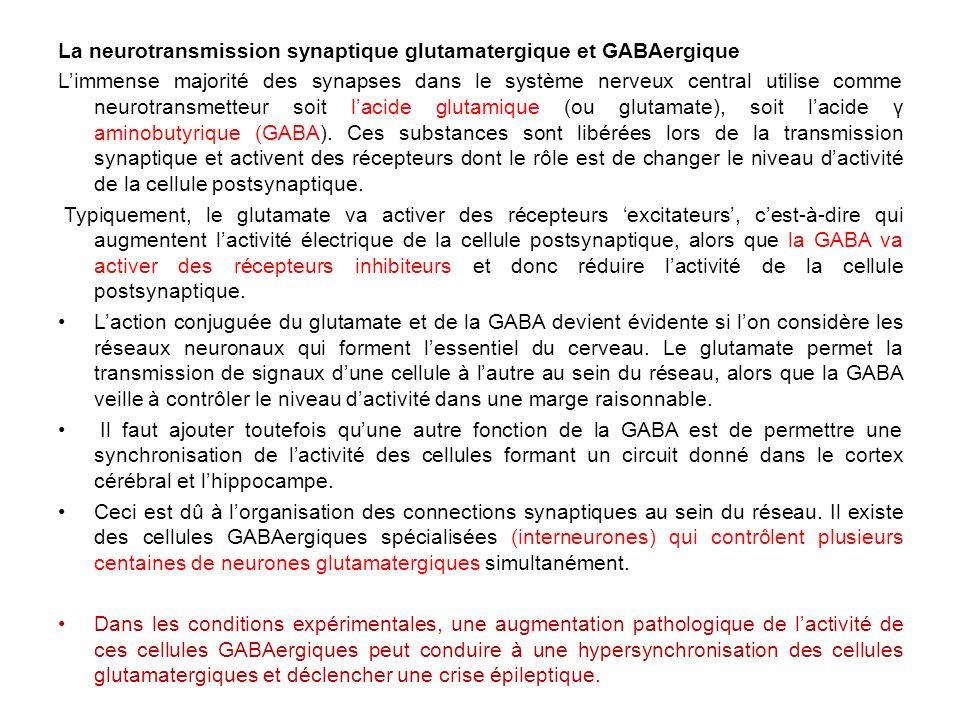 La neurotransmission synaptique glutamatergique et GABAergique
