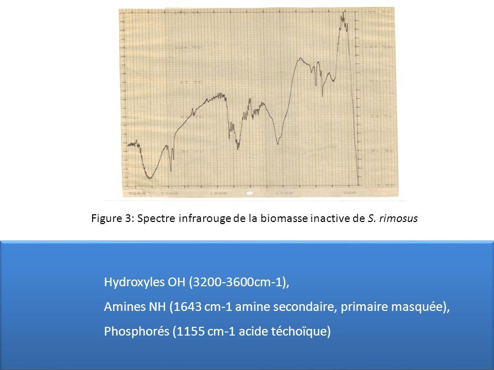 Figure 3: Spectre infrarouge de la biomasse inactive de S. rimosus