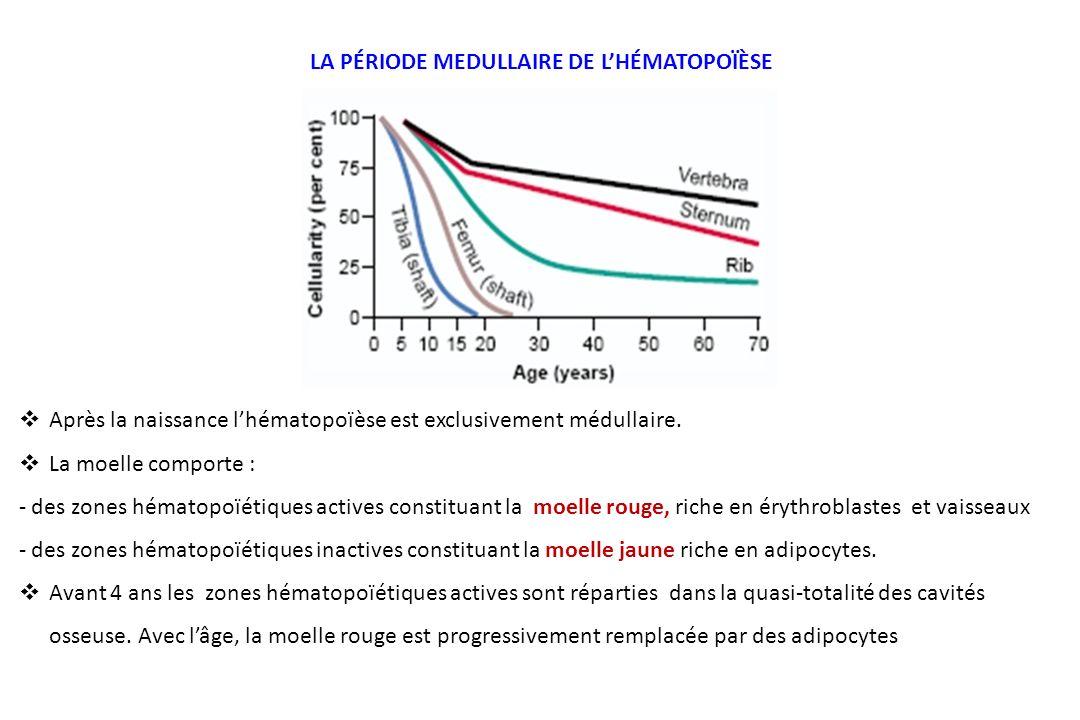 LA PÉRIODE MEDULLAIRE DE L'HÉMATOPOÏÈSE