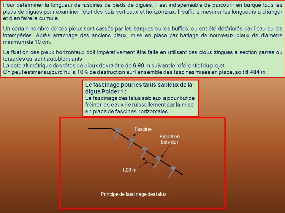Le fascinage pour les talus sableux de la digue Polder 1 :
