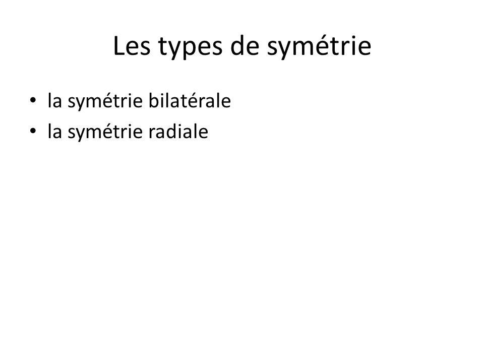 Les types de symétrie la symétrie bilatérale la symétrie radiale