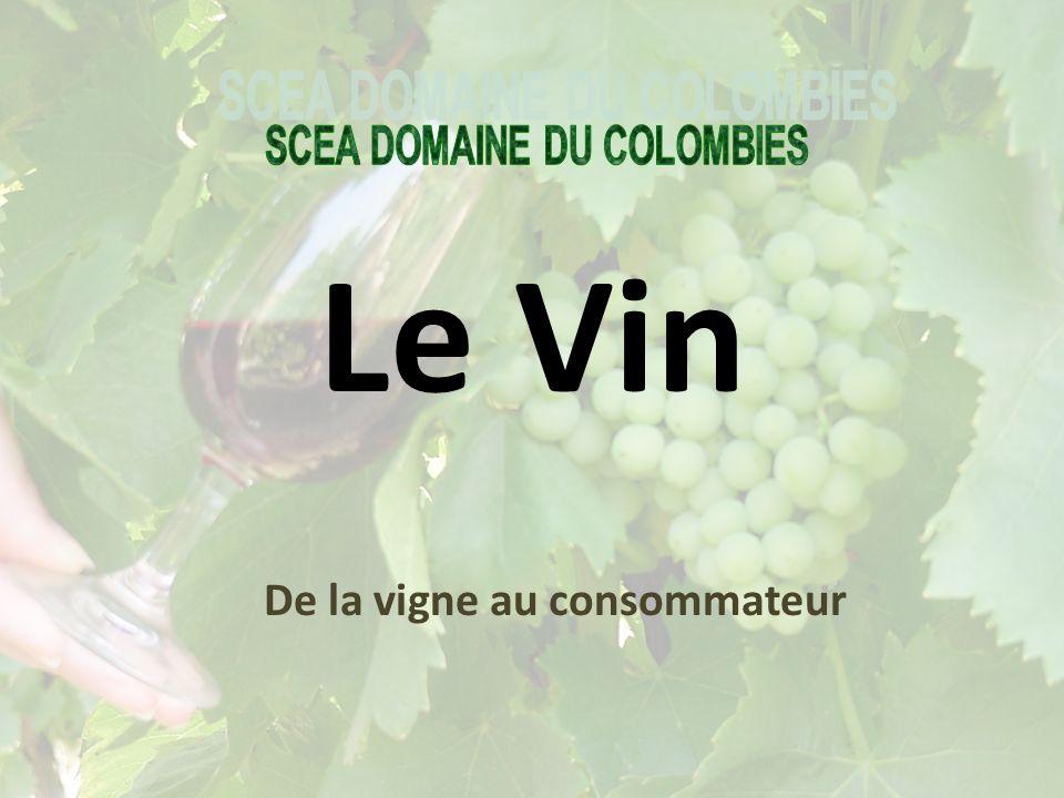 De la vigne au consommateur