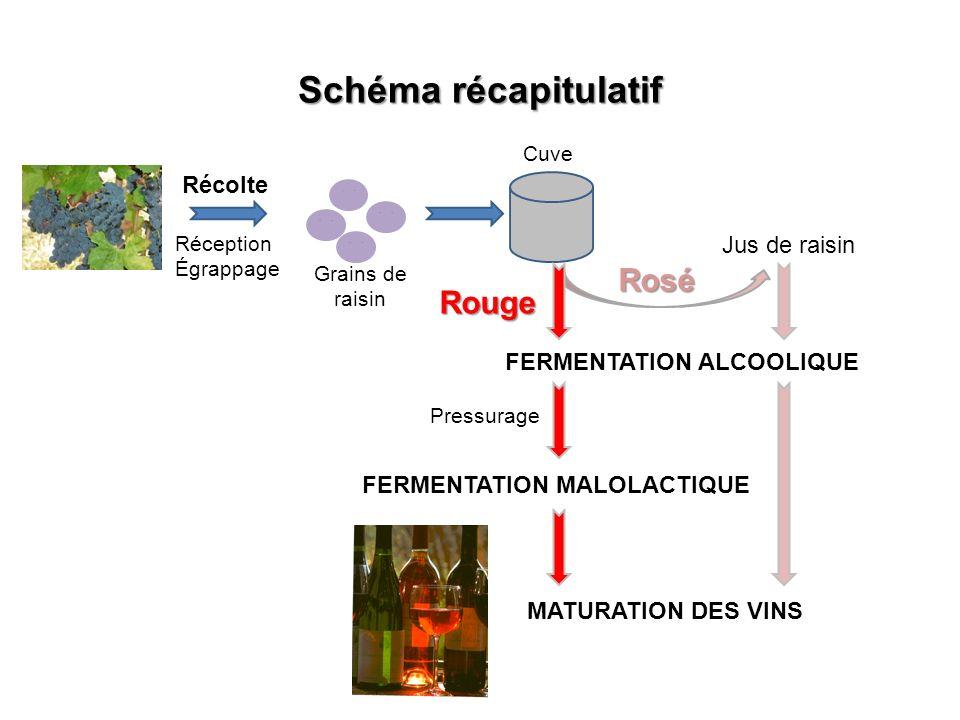 Schéma récapitulatif Rosé Rouge Récolte Jus de raisin