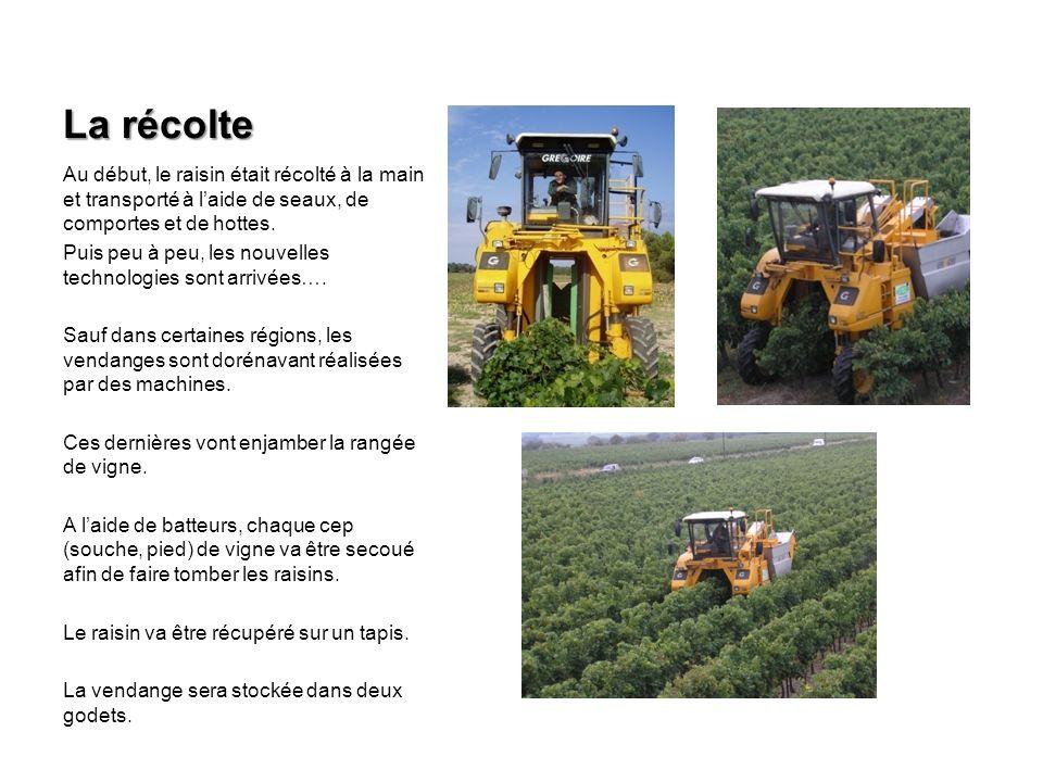 La récolte Au début, le raisin était récolté à la main et transporté à l'aide de seaux, de comportes et de hottes.