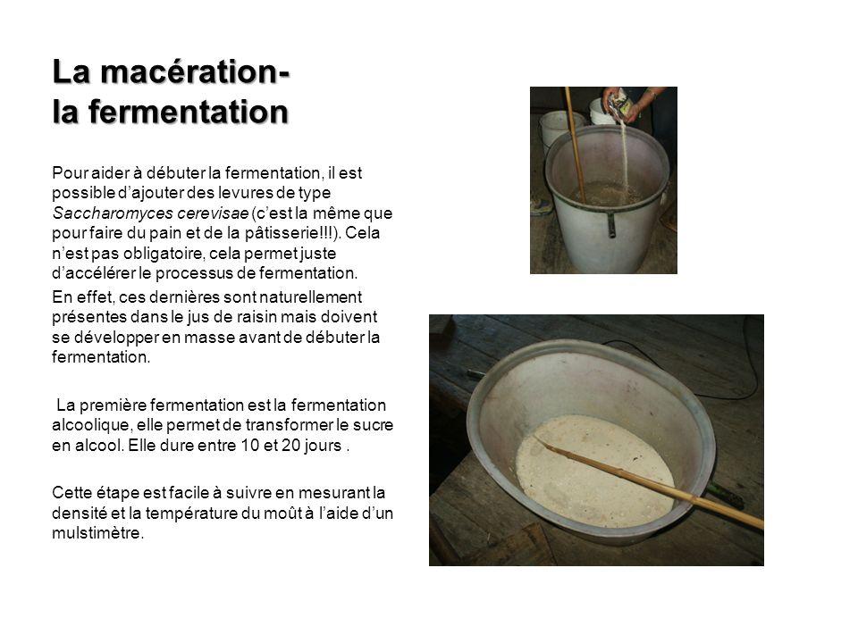 La macération-la fermentation