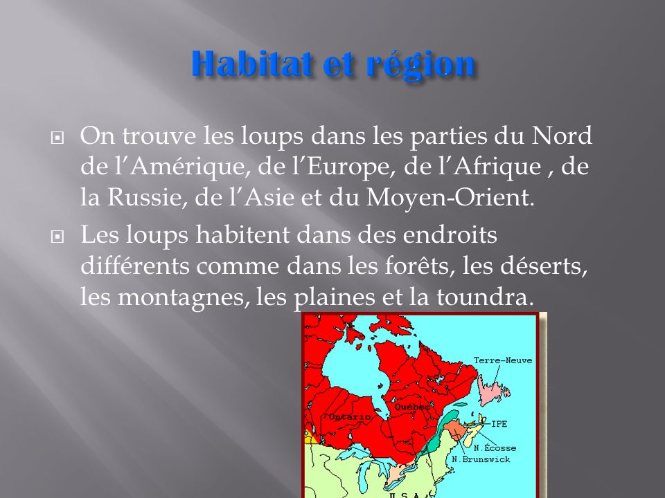 Habitat et région On trouve les loups dans les parties du Nord de l'Amérique, de l'Europe, de l'Afrique , de la Russie, de l'Asie et du Moyen-Orient.