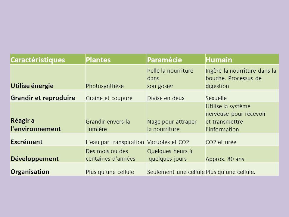 Caractéristiques Plantes Paramécie Humain Utilise énergie