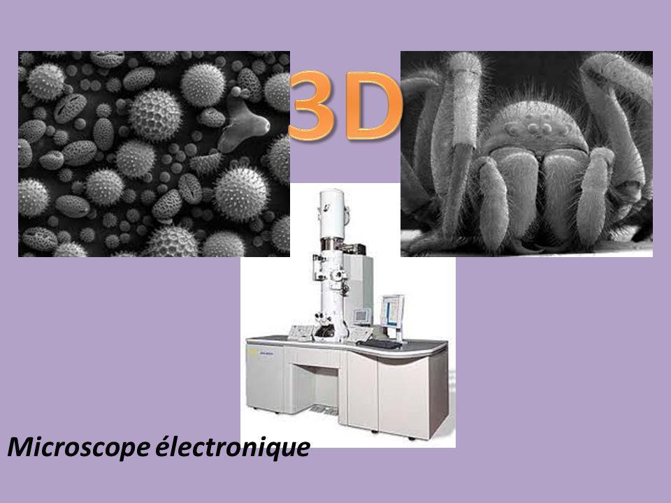 Amanda Tiessen - 2011 3D Microscope électronique