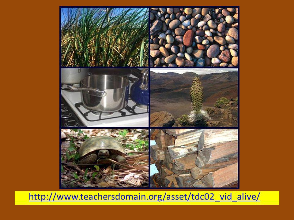 http://www.teachersdomain.org/asset/tdc02_vid_alive/