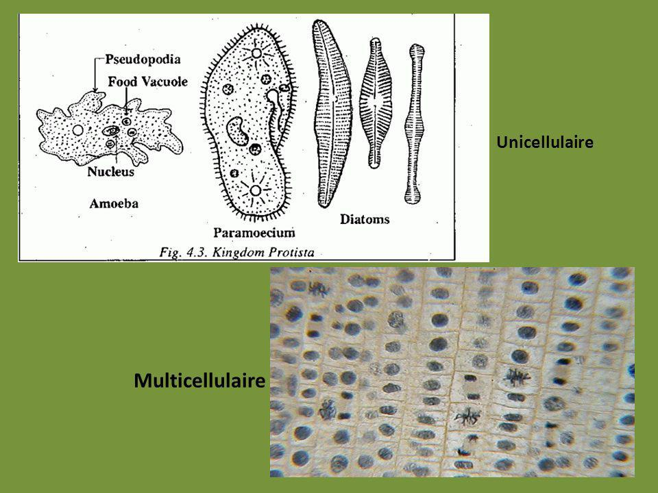 Unicellulaire Multicellulaire