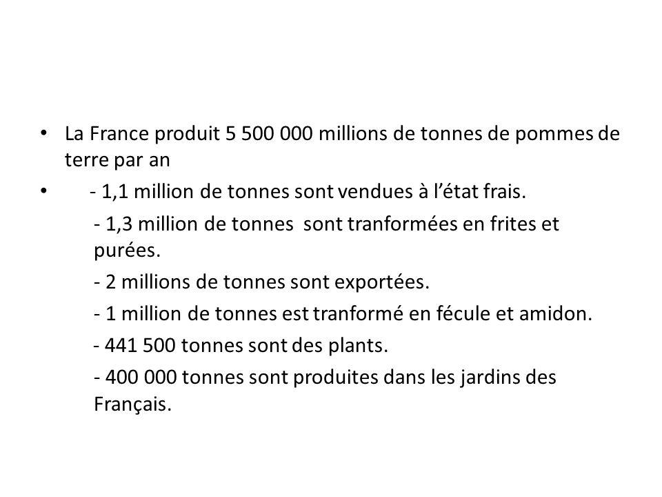 La France produit 5 500 000 millions de tonnes de pommes de terre par an