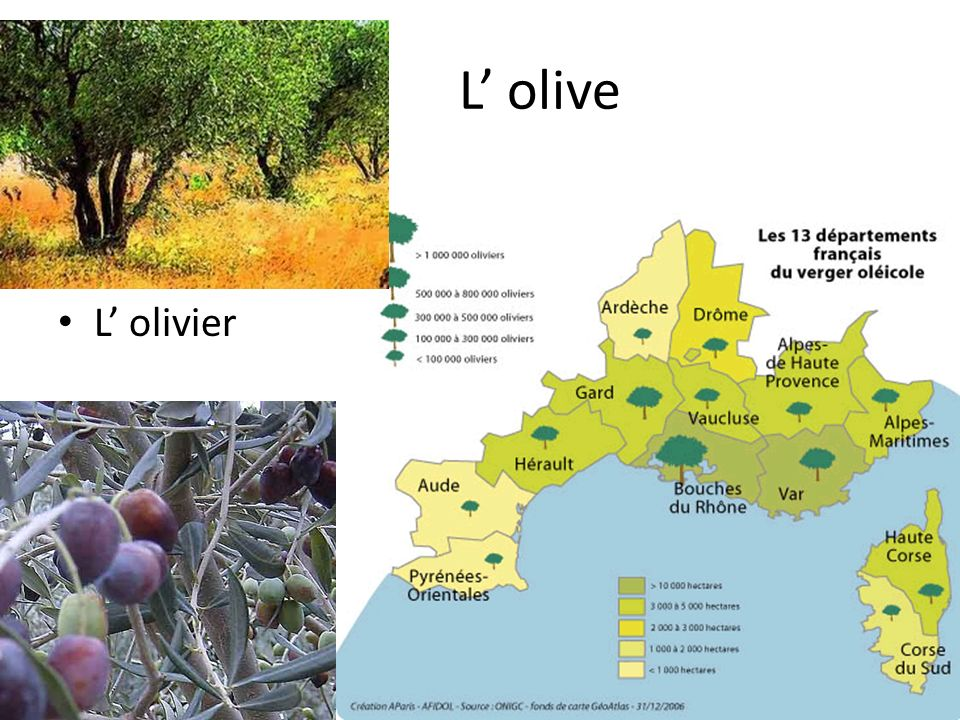 L' olive L' olivier