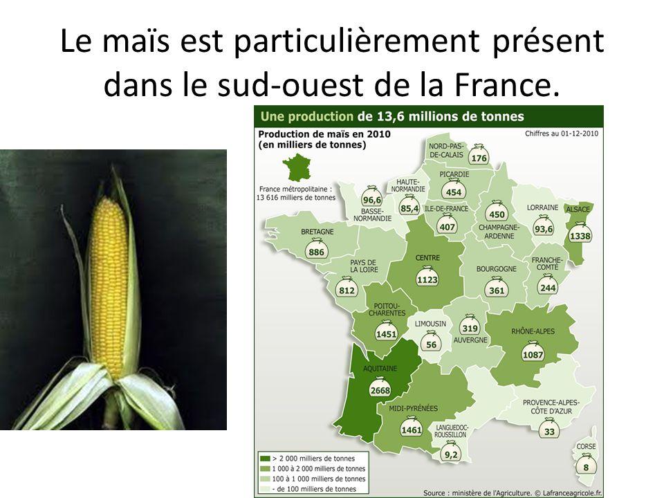 Le maïs est particulièrement présent dans le sud-ouest de la France.