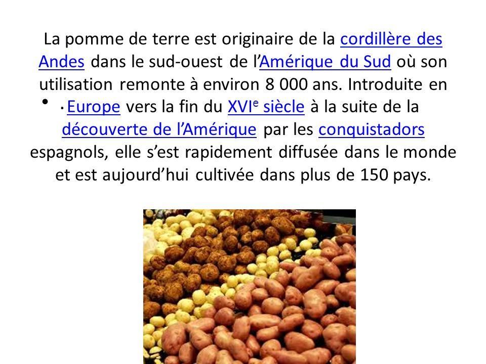 La pomme de terre est originaire de la cordillère des Andes dans le sud-ouest de l'Amérique du Sud où son utilisation remonte à environ 8 000 ans. Introduite en Europe vers la fin du XVIe siècle à la suite de la découverte de l'Amérique par les conquistadors espagnols, elle s'est rapidement diffusée dans le monde et est aujourd'hui cultivée dans plus de 150 pays.