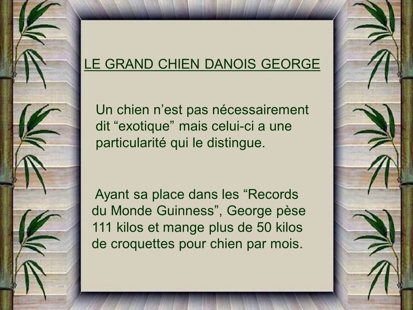 LE GRAND CHIEN DANOIS GEORGE
