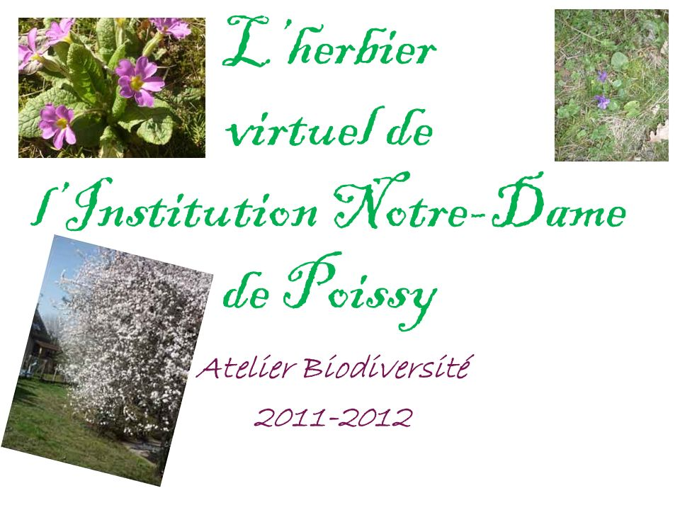 L'herbier virtuel de l'Institution Notre-Dame de Poissy