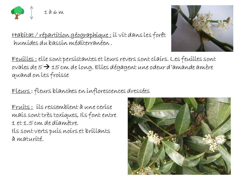 Habitat / répartition géographique : il vit dans les forêt