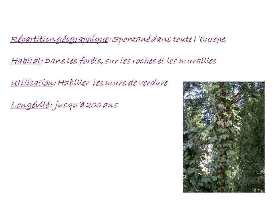 Répartition géographique: Spontané dans toute l'Europe,