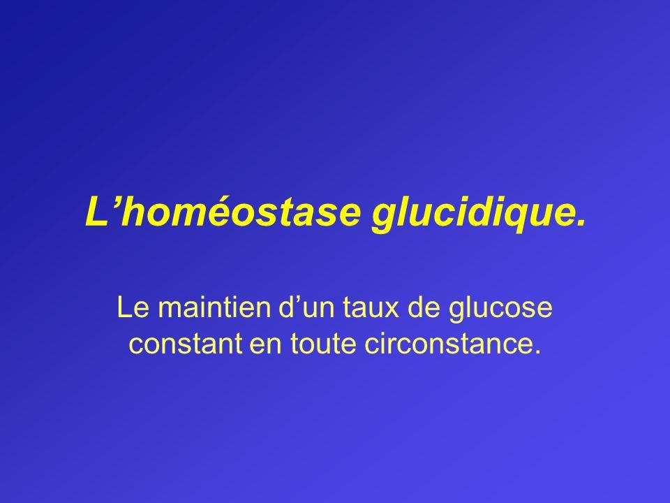 L'homéostase glucidique.