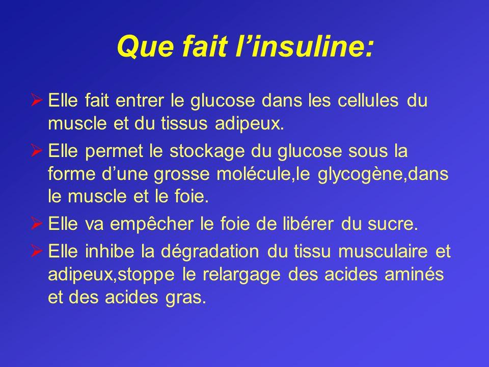 Que fait l'insuline: Elle fait entrer le glucose dans les cellules du muscle et du tissus adipeux.