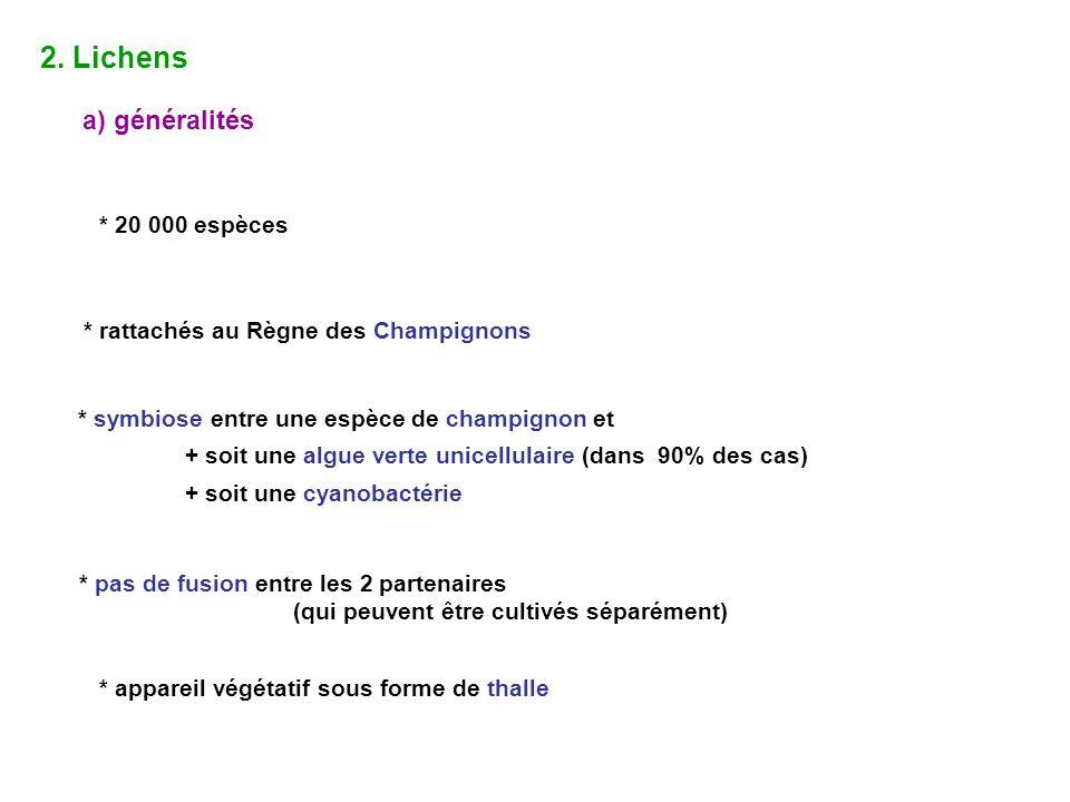 2. Lichens a) généralités * 20 000 espèces