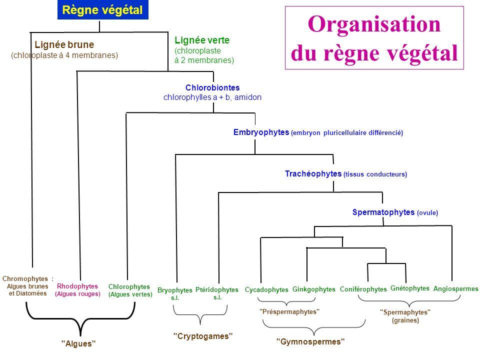 Organisation du règne végétal