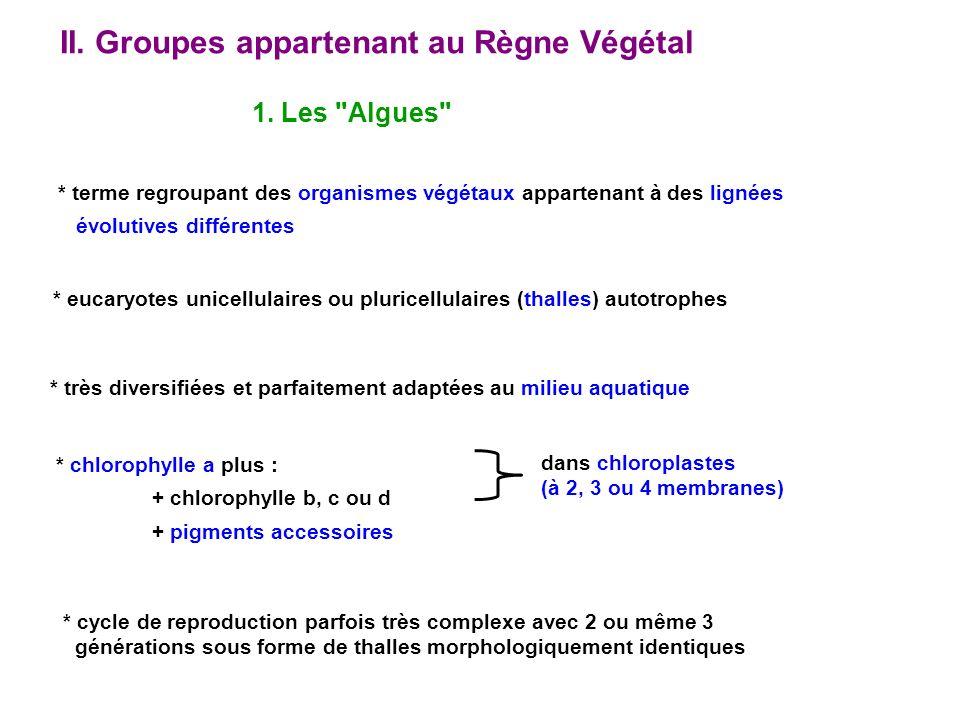 1. Les Algues II. Groupes appartenant au Règne Végétal