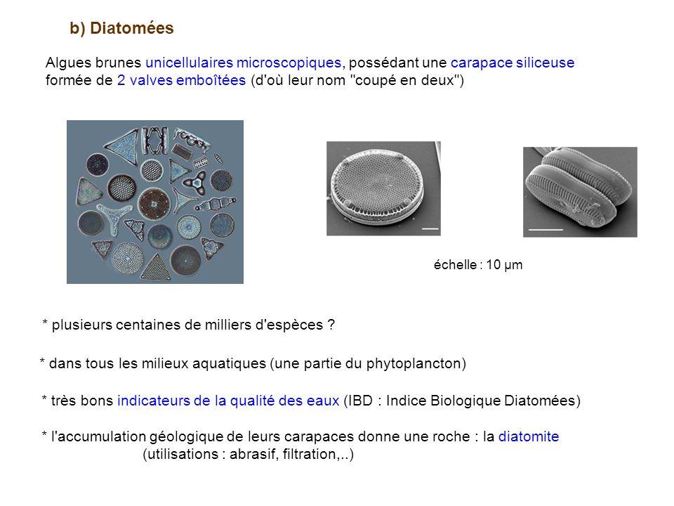 b) Diatomées Algues brunes unicellulaires microscopiques, possédant une carapace siliceuse.
