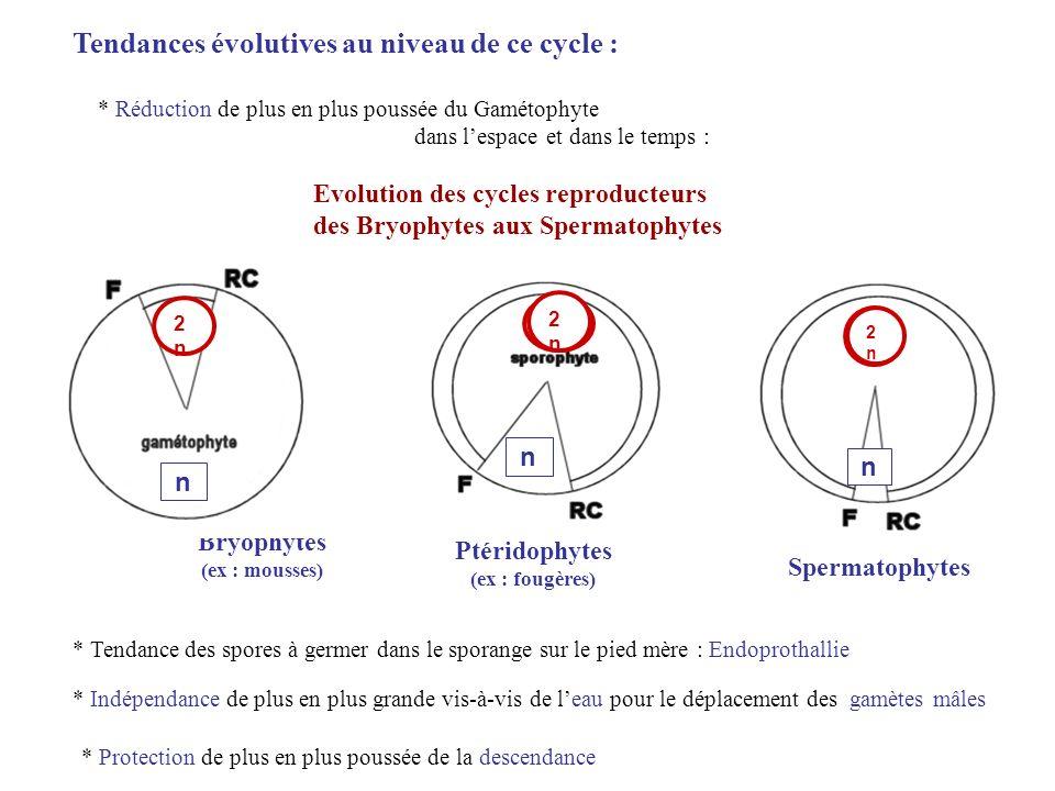 Tendances évolutives au niveau de ce cycle :