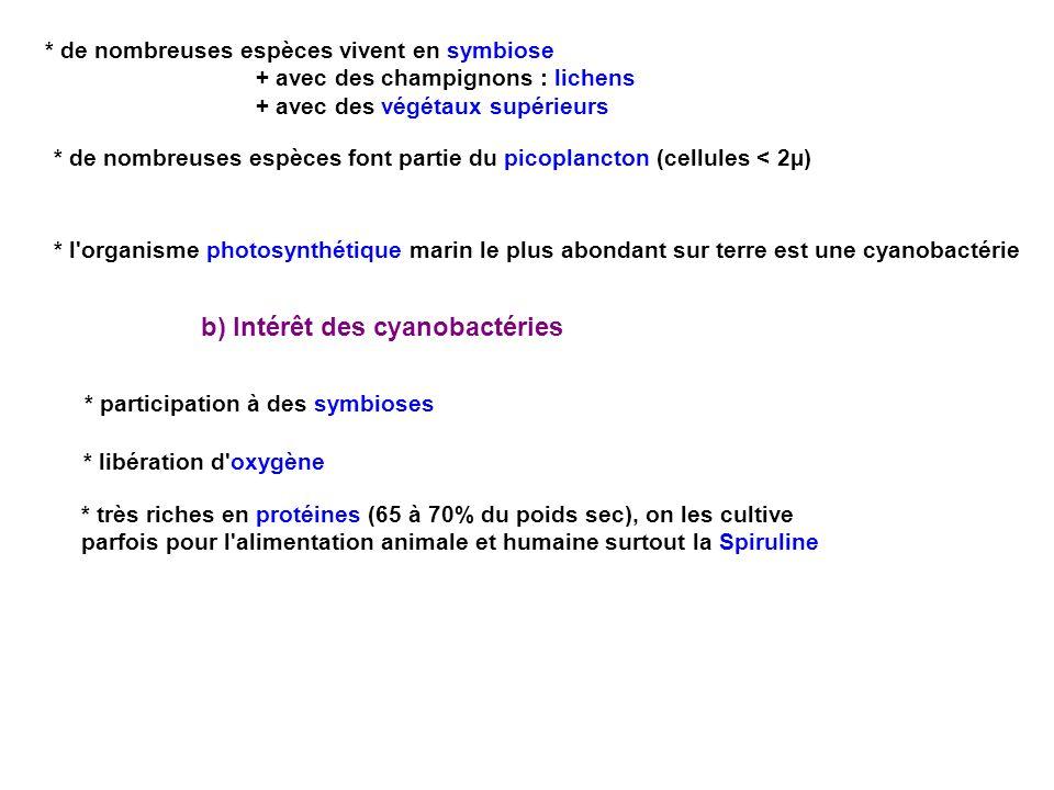 b) Intérêt des cyanobactéries