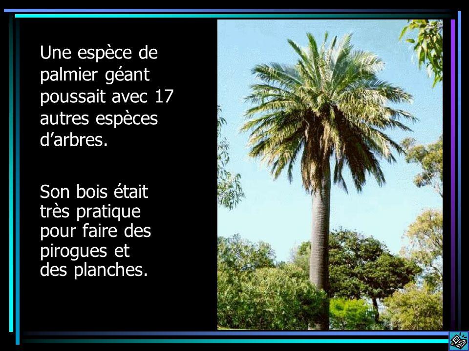 Une espèce de palmier géant poussait avec 17 autres espèces d'arbres.