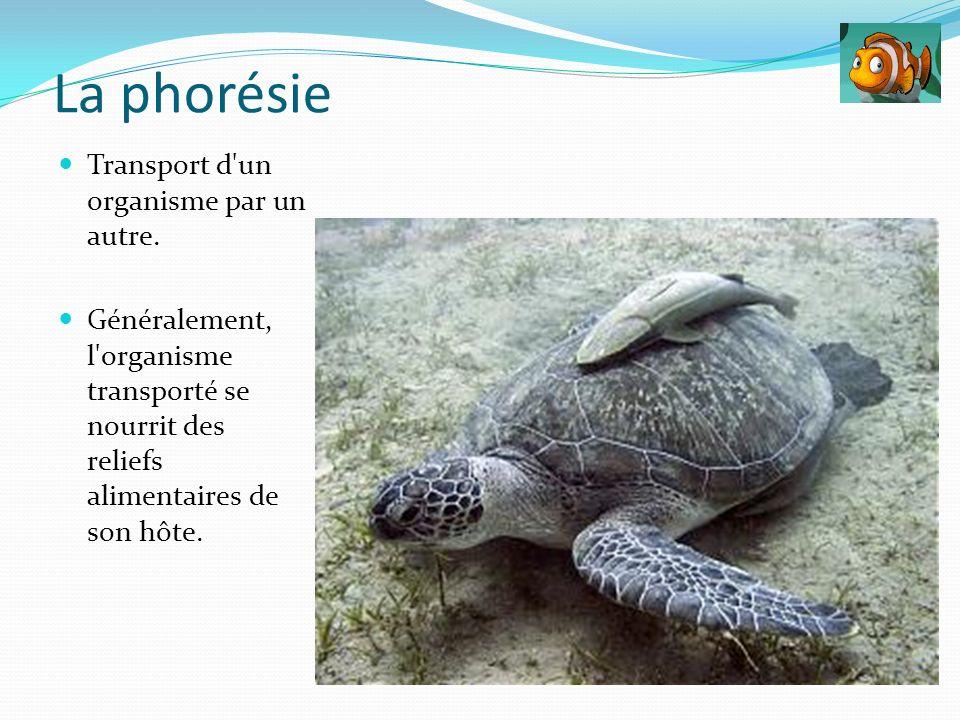 La phorésie Transport d un organisme par un autre.