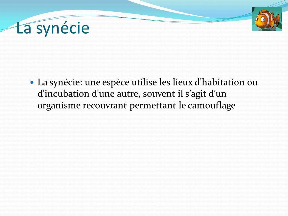 La synécie