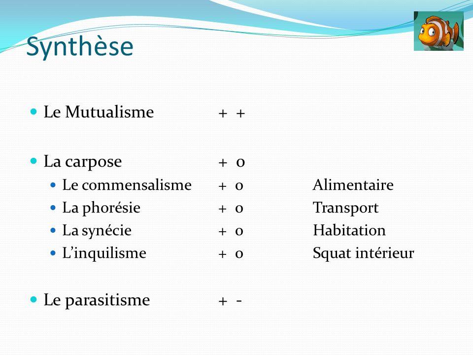 Synthèse Le Mutualisme + + La carpose + 0 Le parasitisme + -