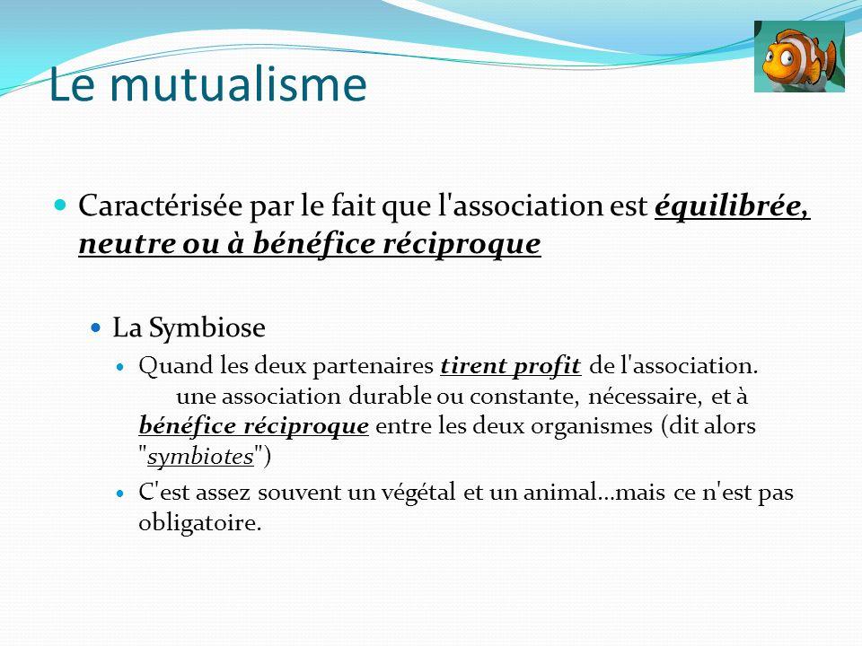 Le mutualisme Caractérisée par le fait que l association est équilibrée, neutre ou à bénéfice réciproque.