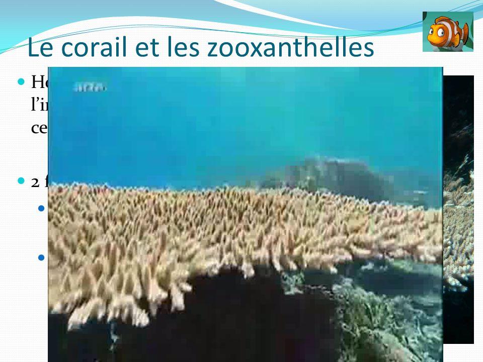 Le corail et les zooxanthelles