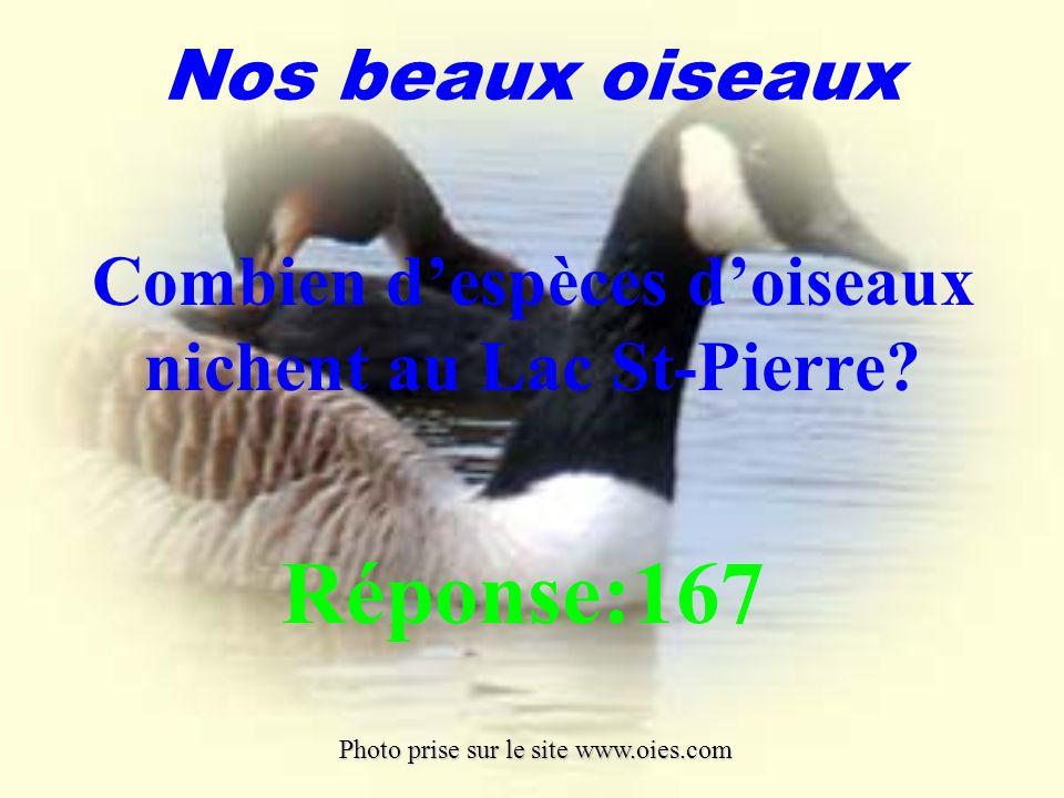 Combien d'espèces d'oiseaux nichent au Lac St-Pierre