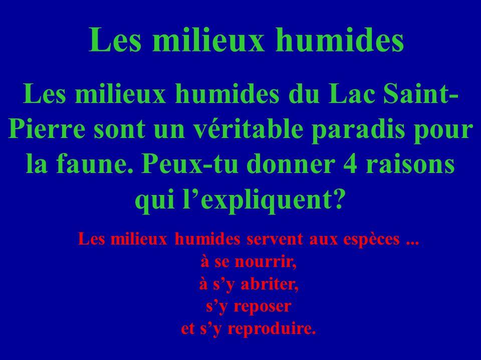 Les milieux humides Les milieux humides du Lac Saint-Pierre sont un véritable paradis pour la faune. Peux-tu donner 4 raisons qui l'expliquent