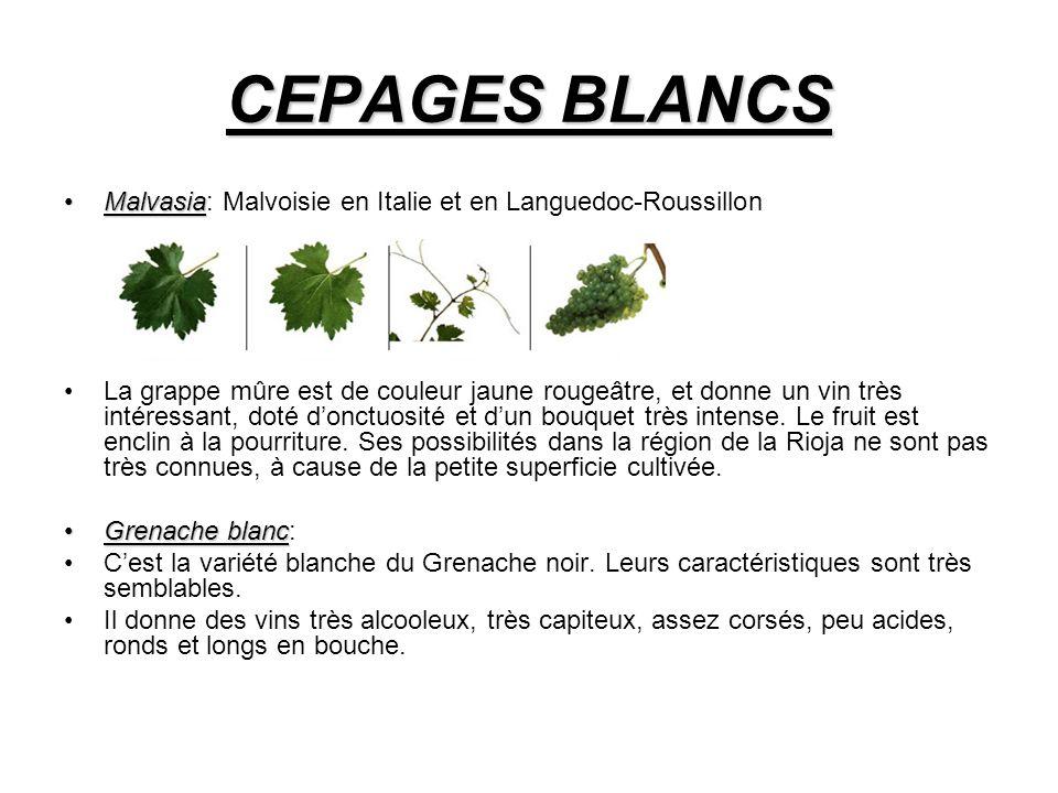 CEPAGES BLANCS Malvasia: Malvoisie en Italie et en Languedoc-Roussillon.