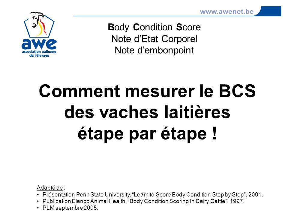 Comment mesurer le BCS des vaches laitières étape par étape !