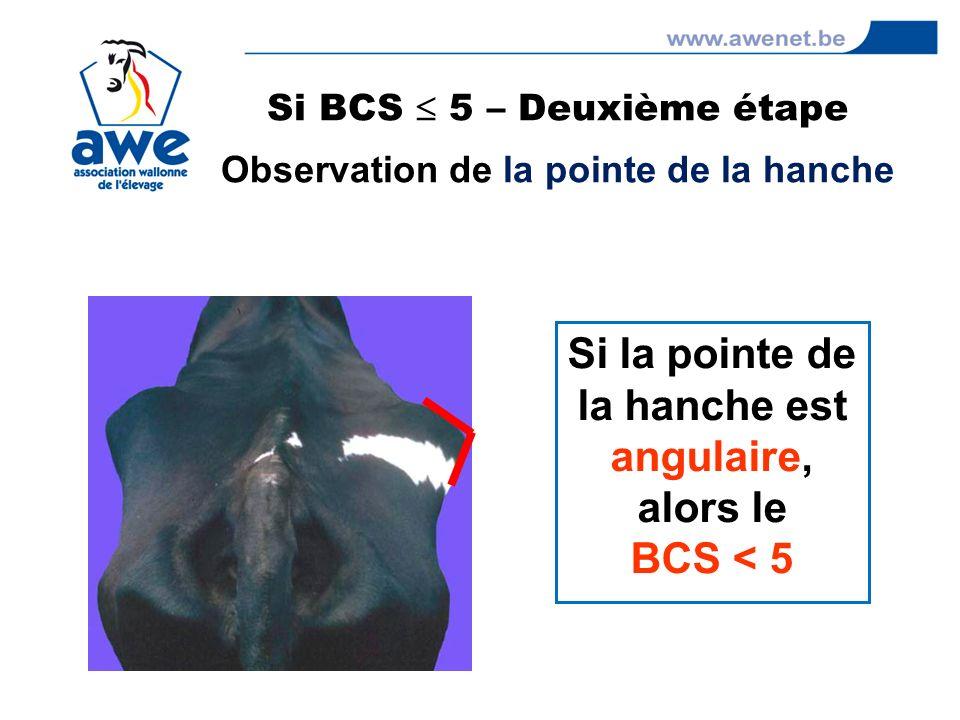 Si BCS  5 – Deuxième étape Observation de la pointe de la hanche
