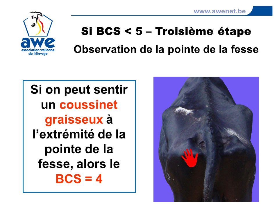 Si BCS < 5 – Troisième étape Observation de la pointe de la fesse