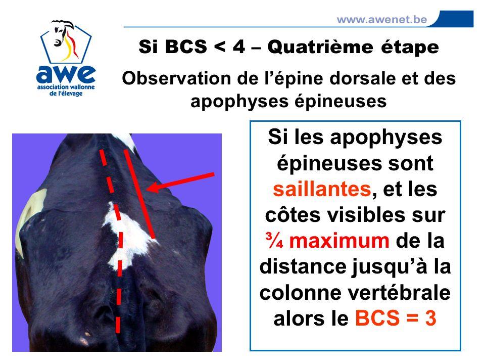 Si BCS < 4 – Quatrième étape