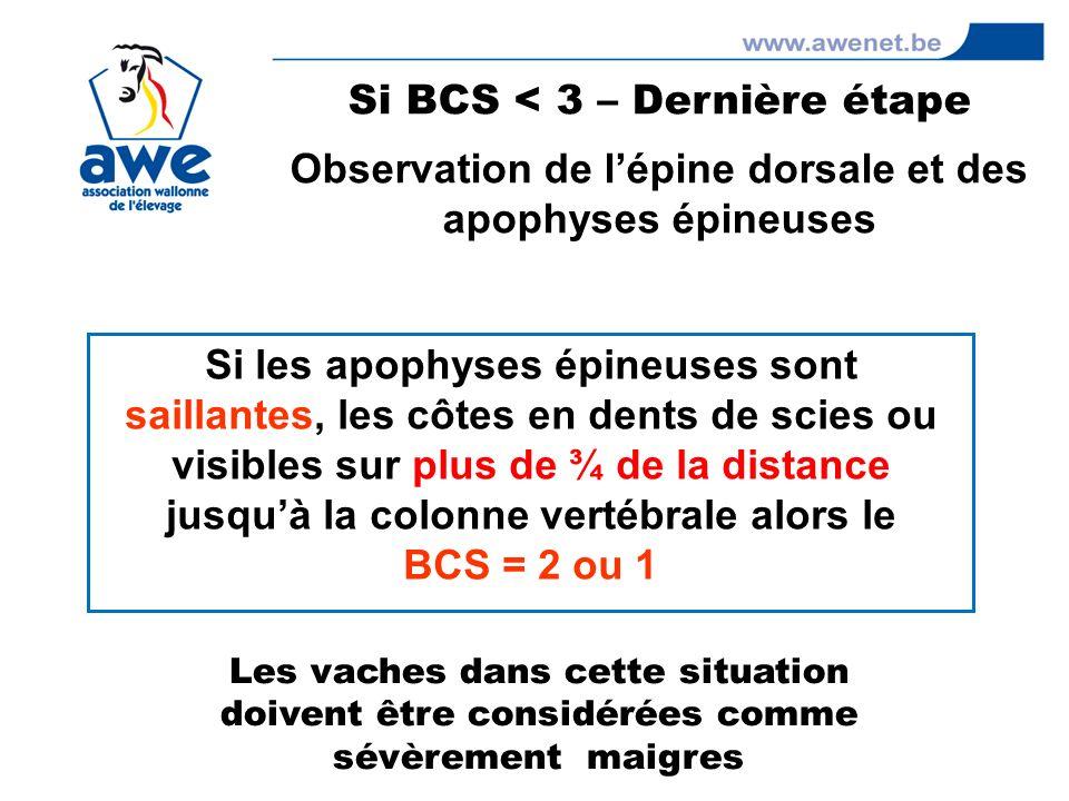 Si BCS < 3 – Dernière étape
